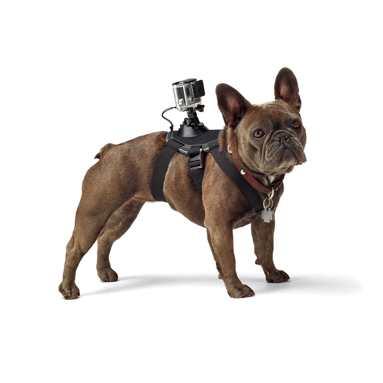 Gopro Small Dog Harness