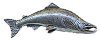 Just Fish Pewter Large Salmon Lapel Pin