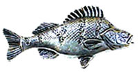 Just Fish Pewter Perch Lapel Pin