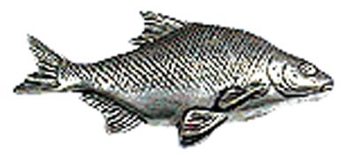 Just Fish Pewter Lapel Pin Bream