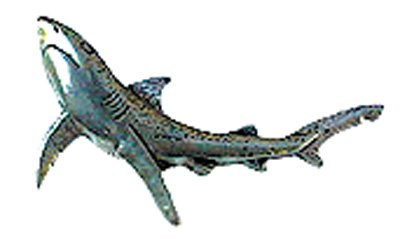 Just Fish Pewter Lapel Pin Blue Shark