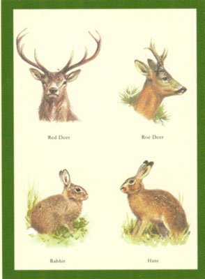 Just Fish Red Deer, Roe Deer, Rabbit, Hare Greetings Card