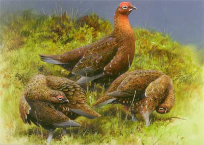Just Fish Red Grouse Greetings Card