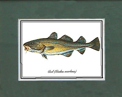 Just Fish Sm Print Unframed Cod