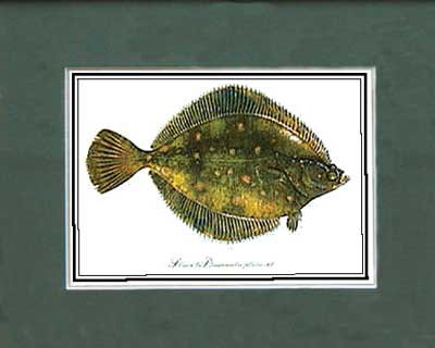 Just Fish Sm Print Unframed Plaice