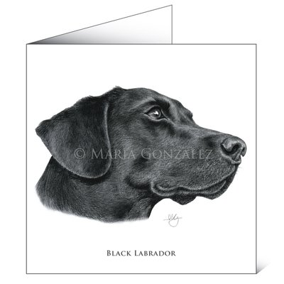 Mayfly Art Black Labrador Greetings Card