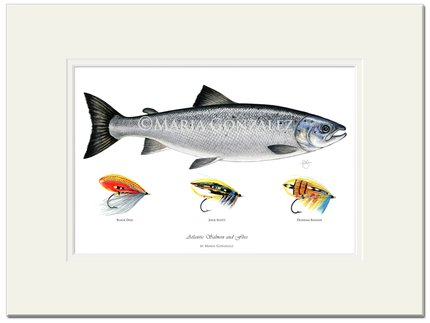 Mayfly Art Salmon and Flies Signed Print