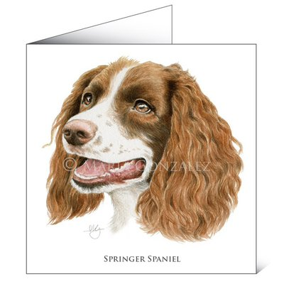 Mayfly Art Springer Spaniel Greetings Card