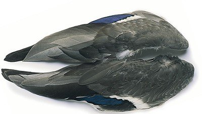 Veniard Mallard Wings