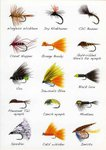 Angling Knots Andy Steer Greetings Cards Flies