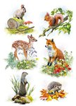 Country Cards British Country Creatures Greetings Card