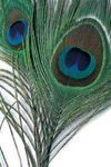 Veniard Peacock Eye Tops