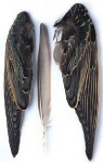 Starling Wings