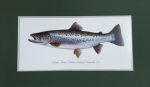 Just Fish Large Signed Print Mounted Lake Trout