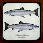 Mayfly Art Atlantic Salmon Coaster - Individual