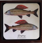 Mayfly Art Coasters - Set of 4