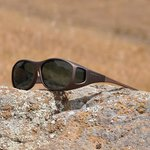 Cocoons Sunglasses 10