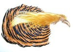 Veniard Golden Pheasant Complete Head